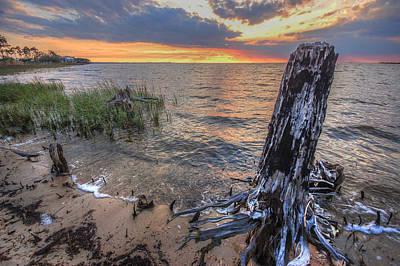 Digital Art - Stumpy 2 by Michael Thomas