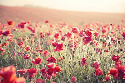 Stunning Poppy Field Landscape Under Summer Sunset Sky With Cros Art Print