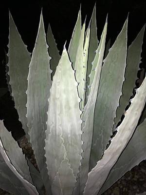 Photograph - Succulent by Patricia Januszkiewicz