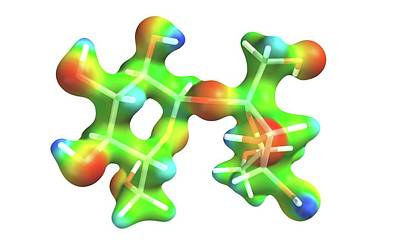 Molecule Photograph - Sucrose Molecule by Alfred Pasieka