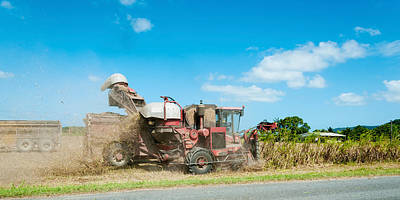 Sugar Cane Being Harvested, Lower Art Print