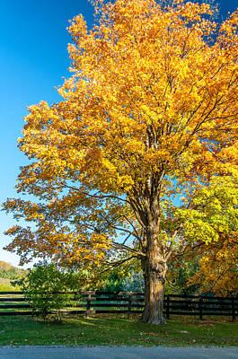 Autumn Photograph - Sugar Maple 2 by Steve Harrington