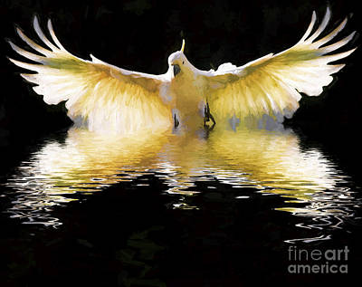 Cockatoo Digital Art - Sulphur Crested Cockatoo In Flight by Avalon Fine Art Photography