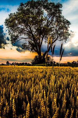 A Summer Evening Photograph - Summer Evening After A Rain by Michael Arend