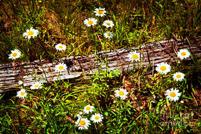 Summer Flowers On The Blue Ridge Parkway 7653 Art Print by Dan Carmichael