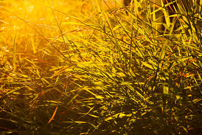 Photograph - Summer Light by Kunal Mehra