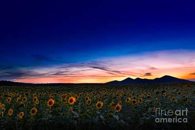 Photograph - Summer Memories by Bernadett Pusztai