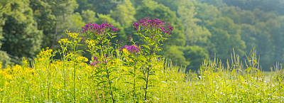 Summer Weeds, Cuyahoga Valley National Art Print by Panoramic Images