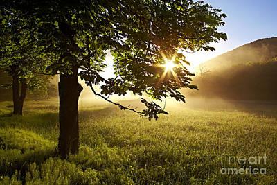 Photograph - Sun Drops by Bernadett Pusztai