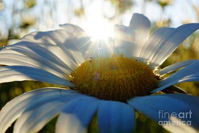 Sun Flower Art Print by Kandids By Katy
