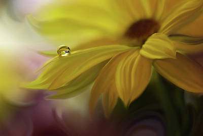 Closeup Wall Art - Photograph - Sunbeam... by Juliana Nan