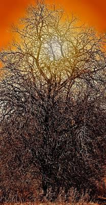 Sunburst Tree  Art Print