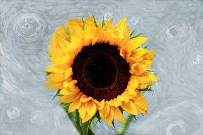 Art Print featuring the photograph Sunflower by Bill Howard