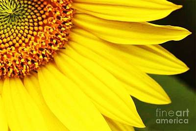 Photograph - Sunflower by Diane Kurtz