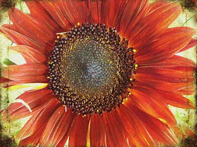 Photograph - Sunflower by Kathy Bassett