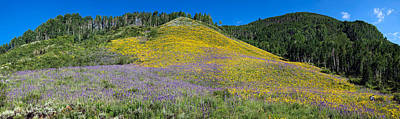 Delphinium Photograph - Sunflowers And Larkspur Wildflowers by Panoramic Images