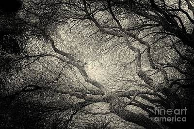 Sunlight Through Branches Of A Tree Art Print