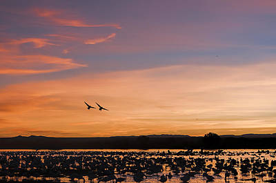 Sunrise - Snow Geese - Birds Art Print by SharaLee Art