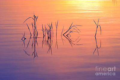 Photograph - Sunrise Grass Reflections by Jane Axman