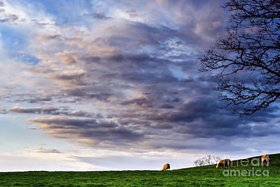 Pasture Scenes Digital Art - Sunrise Grazing by Thomas R Fletcher