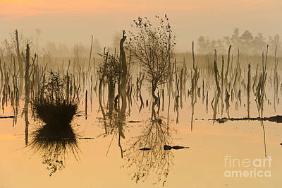 Photograph - Sunrise In Germany by Willi Rolfes