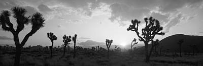Sunset, Joshua Tree Park, California Art Print by Panoramic Images
