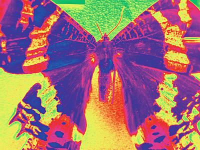 Photograph - Sunset Moth by Bill Owen