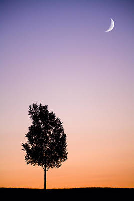 Moon Photograph - Sunset Tree by Alexey Stiop