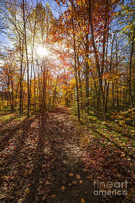 Fallen Leaves Photograph - Sunshine In Fall Forest by Elena Elisseeva