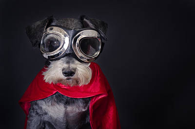 Superman Photograph - Super Dog by Mesha Zelkovich