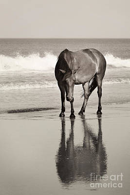 Glass Eyed Pony Photograph - Surf Snooze by Lyndsey Warren