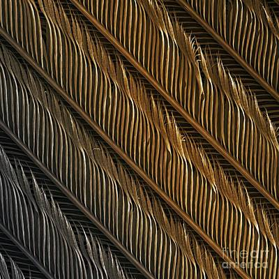 Swallow Photograph - Swallow Feather Detail, Sem by Power and Syred