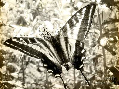 Photograph - Swallow Tail by Jamie Johnson