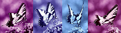 Photograph - Swallowtail Sweetness Sequence by Leda Robertson