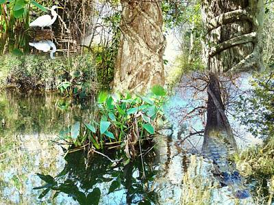 Photograph - Swamp Life by Van Ness