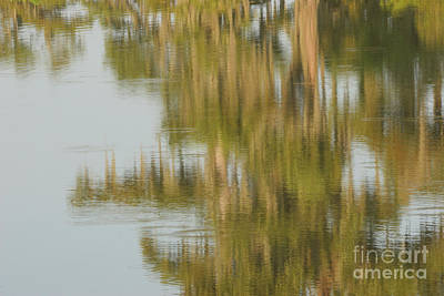 Swamp Reflections Art Print by Kelly Morvant