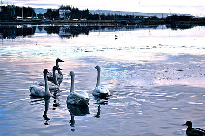 Photograph - Swan Lake by Yen