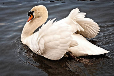 Fantasy Royalty-Free and Rights-Managed Images - Swan One by Elf EVANS