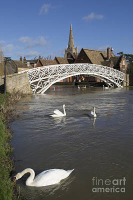 Swans At The Chinese Bridge Art Print by Keith Douglas