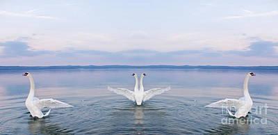 City Lights - Swans dance on Balaton lake by Odon Czintos