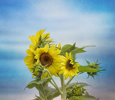 Photograph - Swaying In The Breeze 2 by Kim Hojnacki