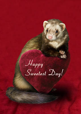Photograph - Sweetest Day Ferret by Jeanette K