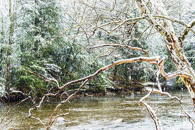 Sycamore Snow And Williams River  Art Print by Thomas R Fletcher