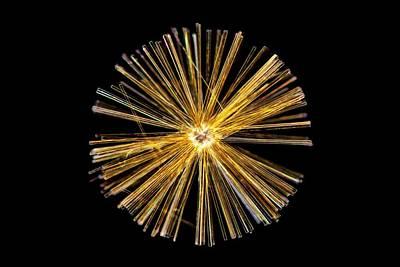 Synedra Diatom Group Art Print by Gerd Guenther