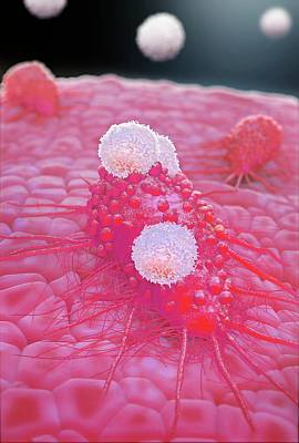 Illustration Art Photograph - T-cells Attacking Cancer Cell by Tim Vernon