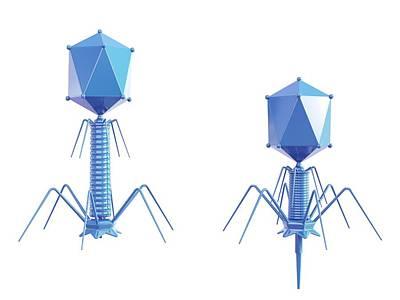 Bacteriophage Wall Art - Photograph - T4 Bacteriophage by Maurizio De Angelis