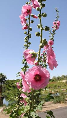 Phoenix Zoo Photograph - Tall And Pink by Sandy Mullins