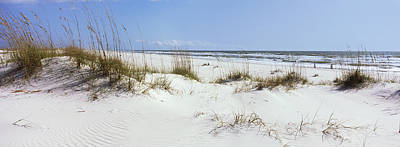 Tall Grass On The Beach, Perdido Key Art Print by Panoramic Images