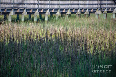 Photograph - Lowcountry Tall Marsh Grass by Dale Powell