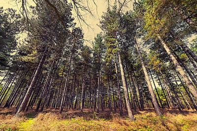 Creek Mixed Media - Tall Trees by Svetlana Sewell